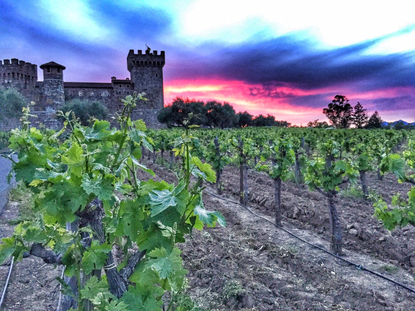 Castillo di Amorosa, the-alyst.com