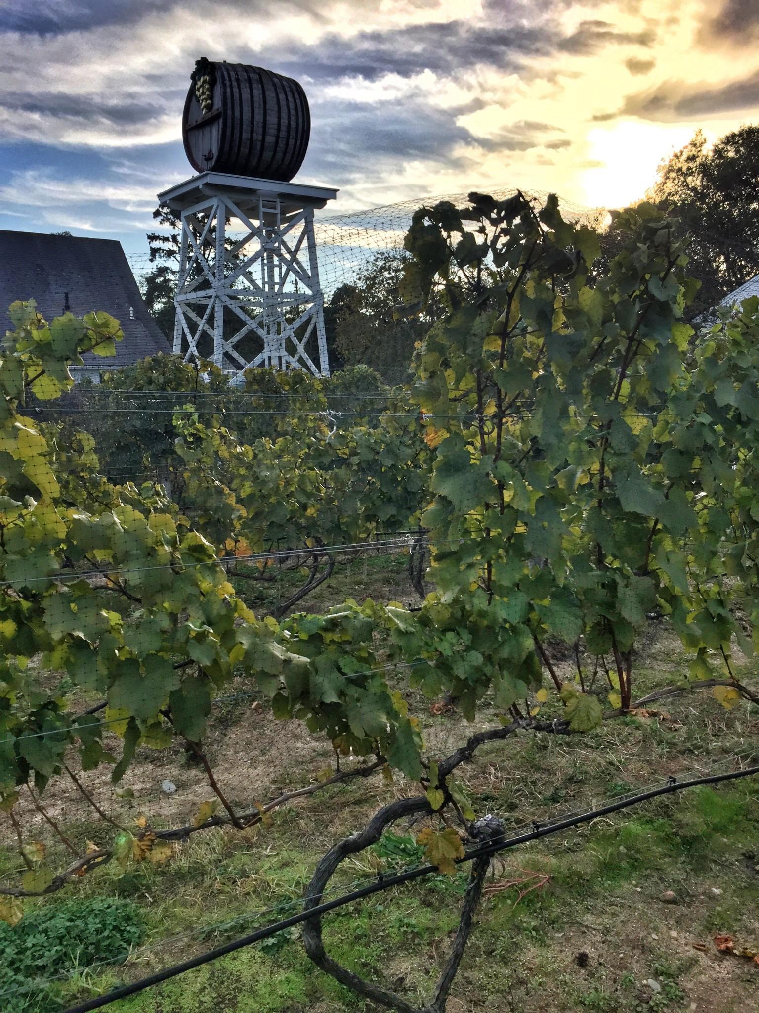 truro vineyards cape cod - the-alyst.com