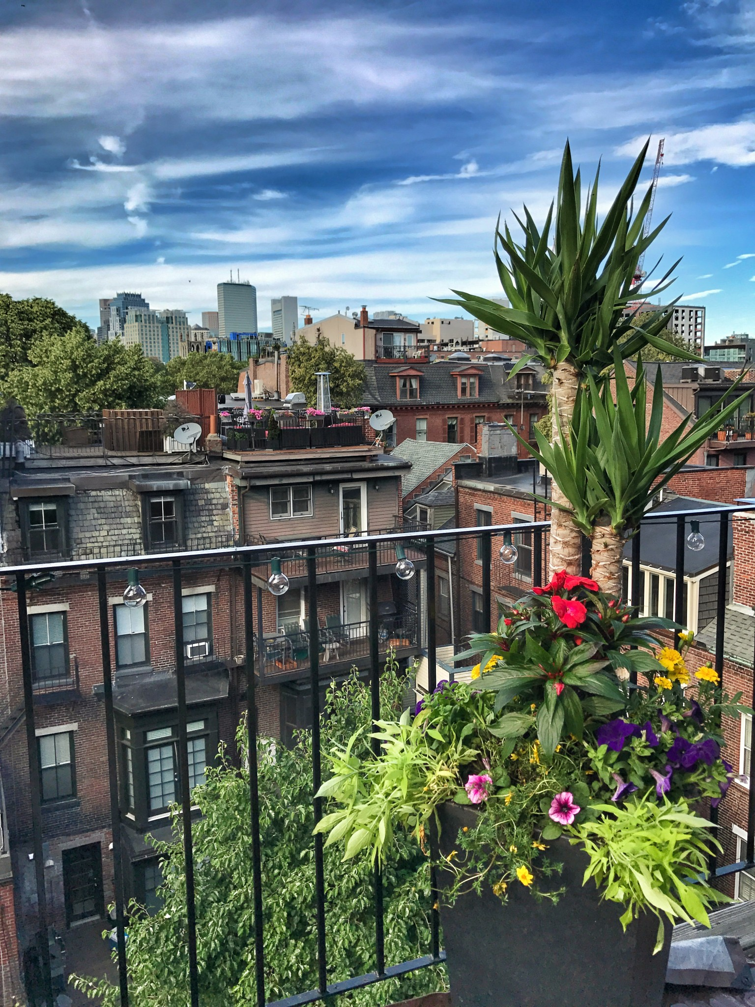 urban garden, boston, balcony garden, the-alyst.com