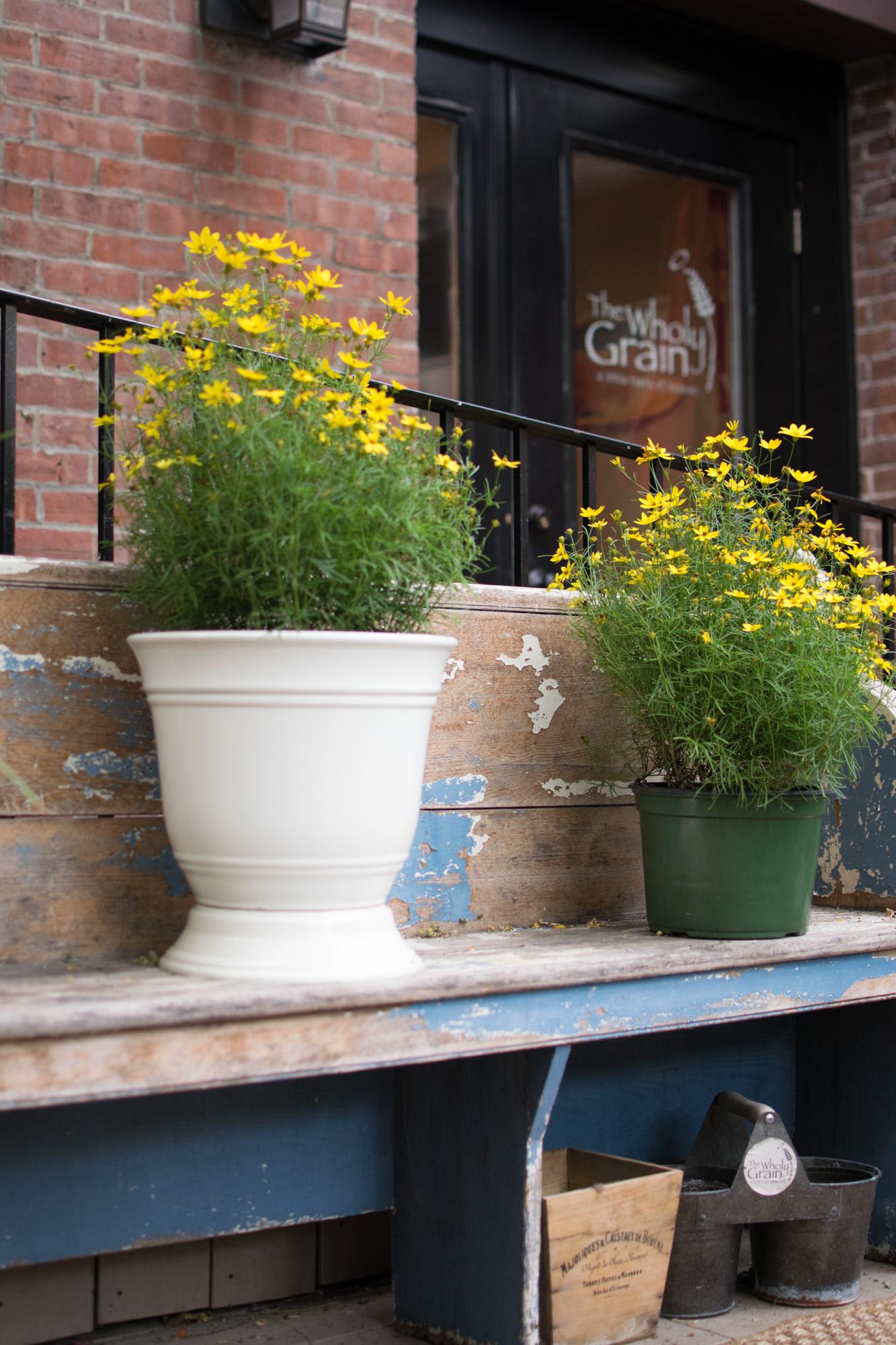 the wholy grain, boston cafés, the-alyst.com