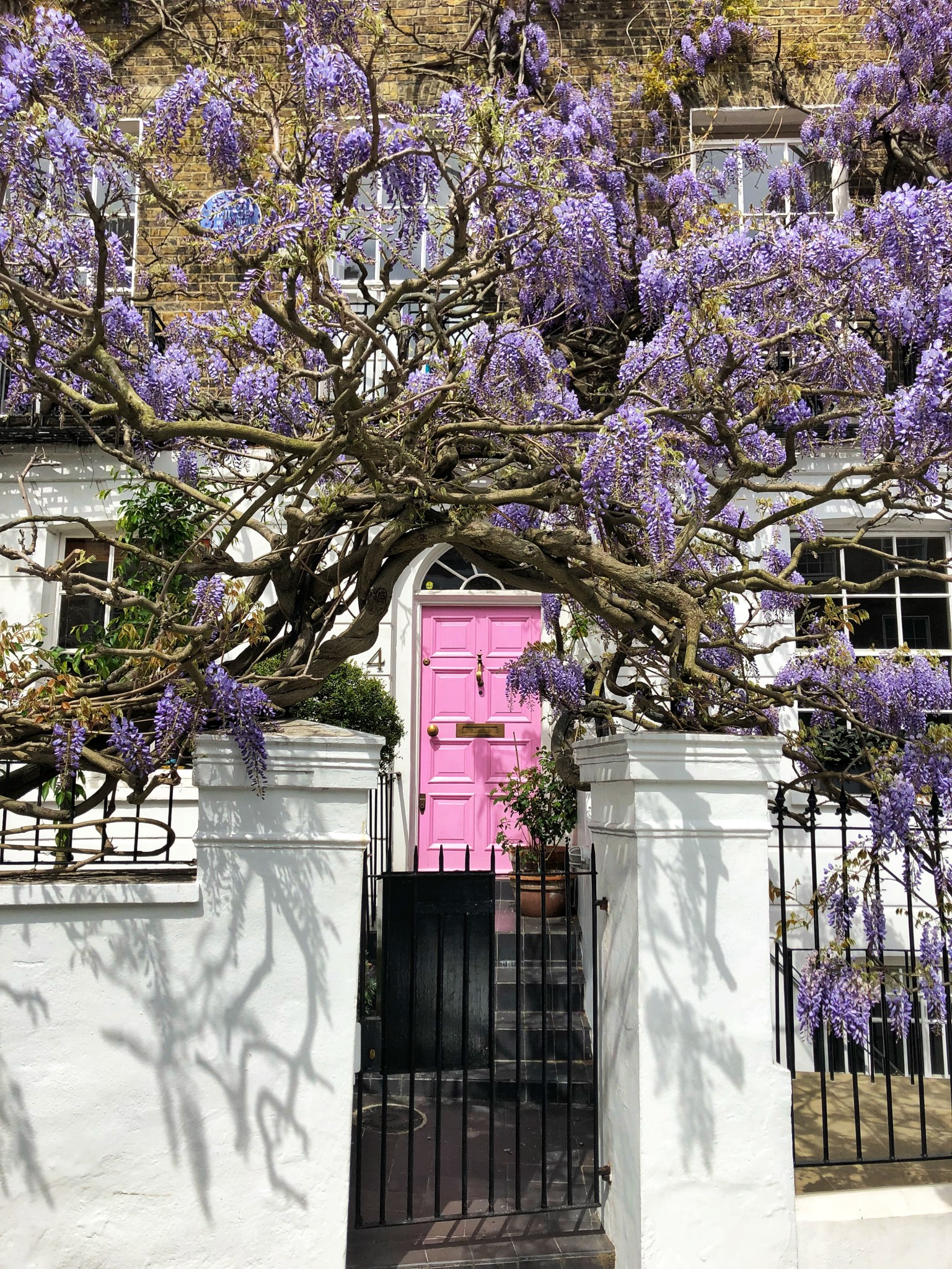 wisteria london, most instagrammable places in london, the-alyst.com
