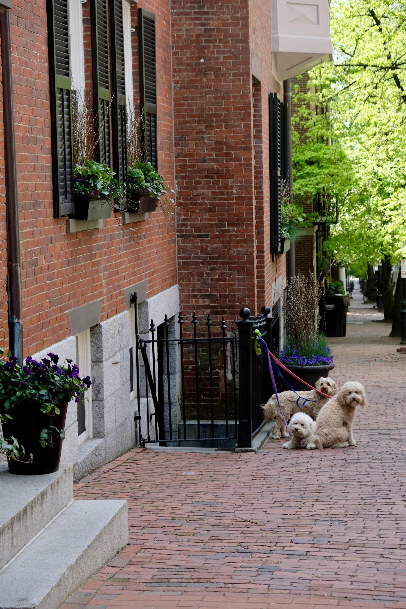 beacon hill boston, the-alyst.com