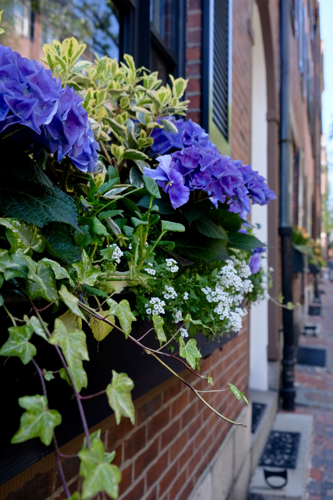 window boxes beacon hill, the-alyst.com