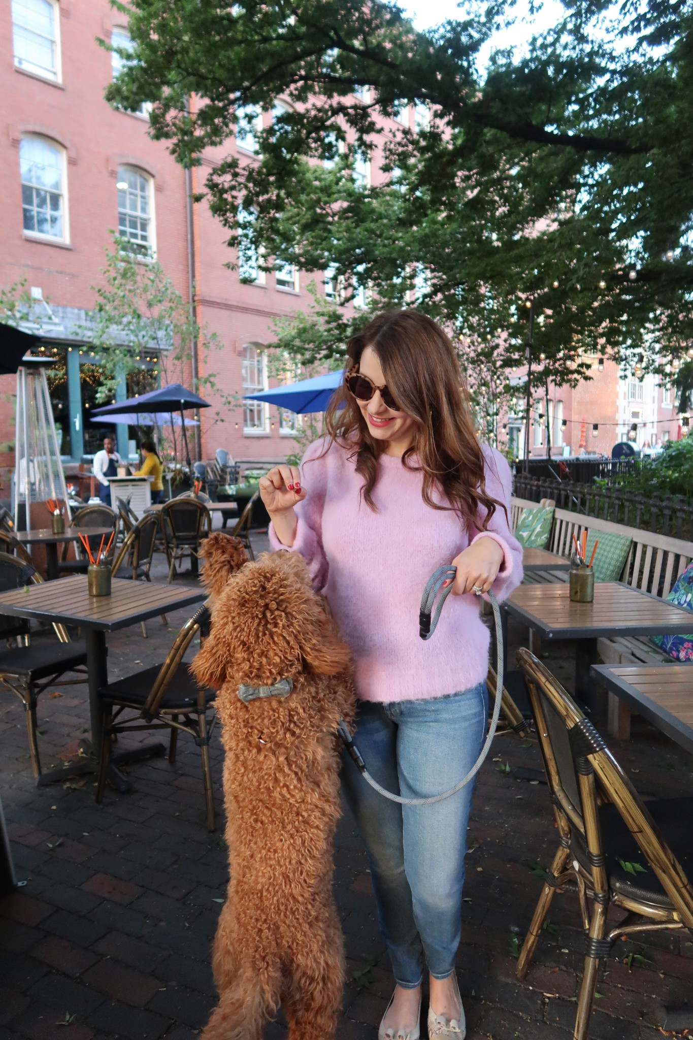 dog friendly patios in boston, the-alyst.com