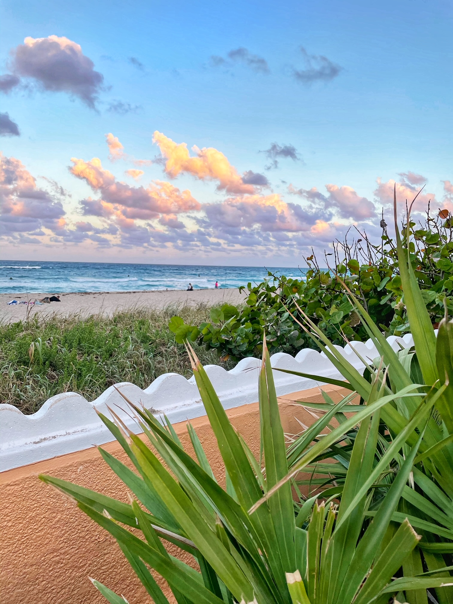 palm beach the-alyst.com